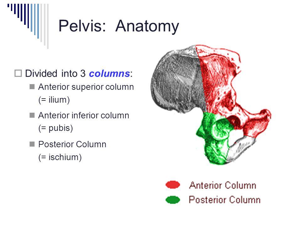 Pelvis: Anatomy  Divided into 3 columns: Anterior superior column (= ilium) Anterior inferior column (= pubis) Posterior Column (= ischium)
