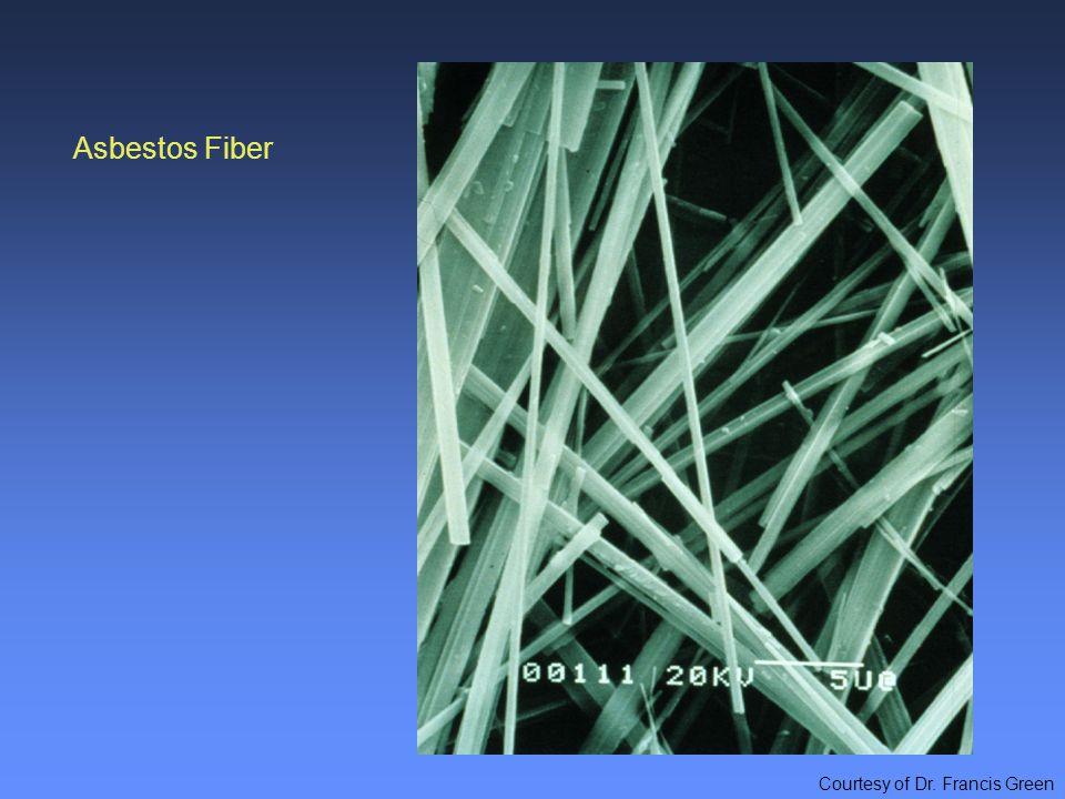 Asbestos Fiber Courtesy of Dr. Francis Green