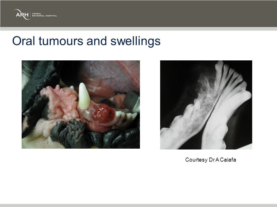 Oral tumours and swellings Courtesy Dr A Caiafa