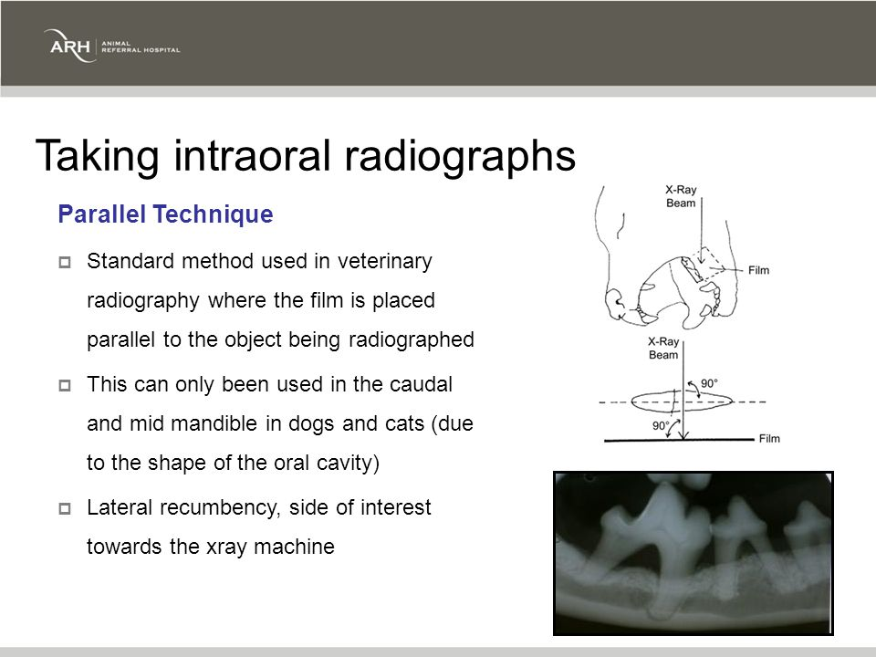 Parallel Technique  Standard method used in veterinary radiography where the film is placed parallel to the object being radiographed  This can only been used in the caudal and mid mandible in dogs and cats (due to the shape of the oral cavity)  Lateral recumbency, side of interest towards the xray machine Taking intraoral radiographs