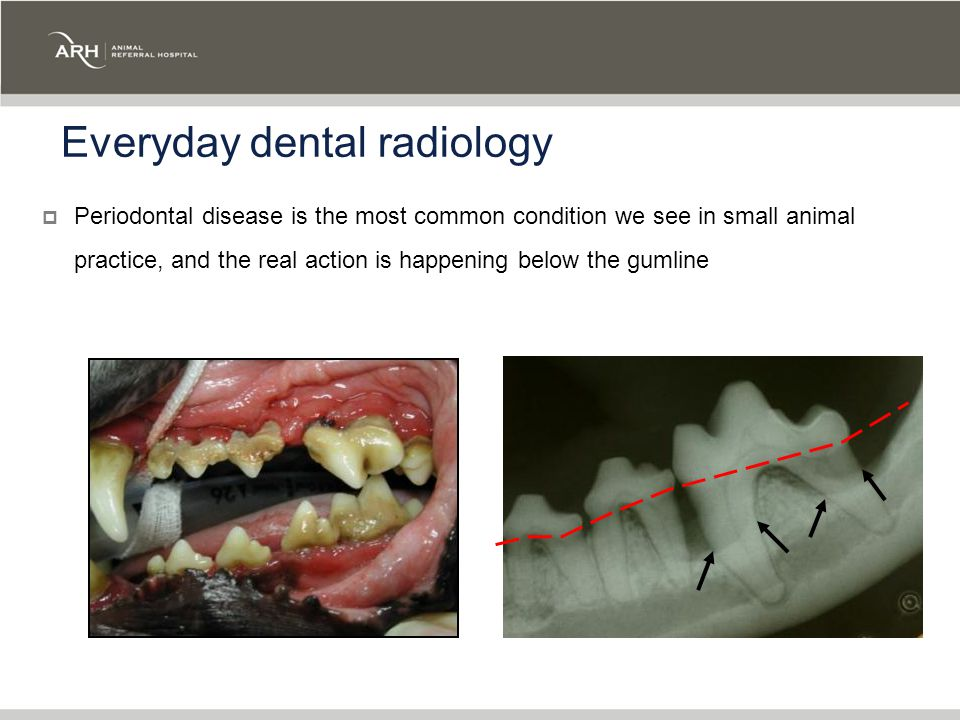 Everyday dental radiology  Periodontal disease is the most common condition we see in small animal practice, and the real action is happening below the gumline