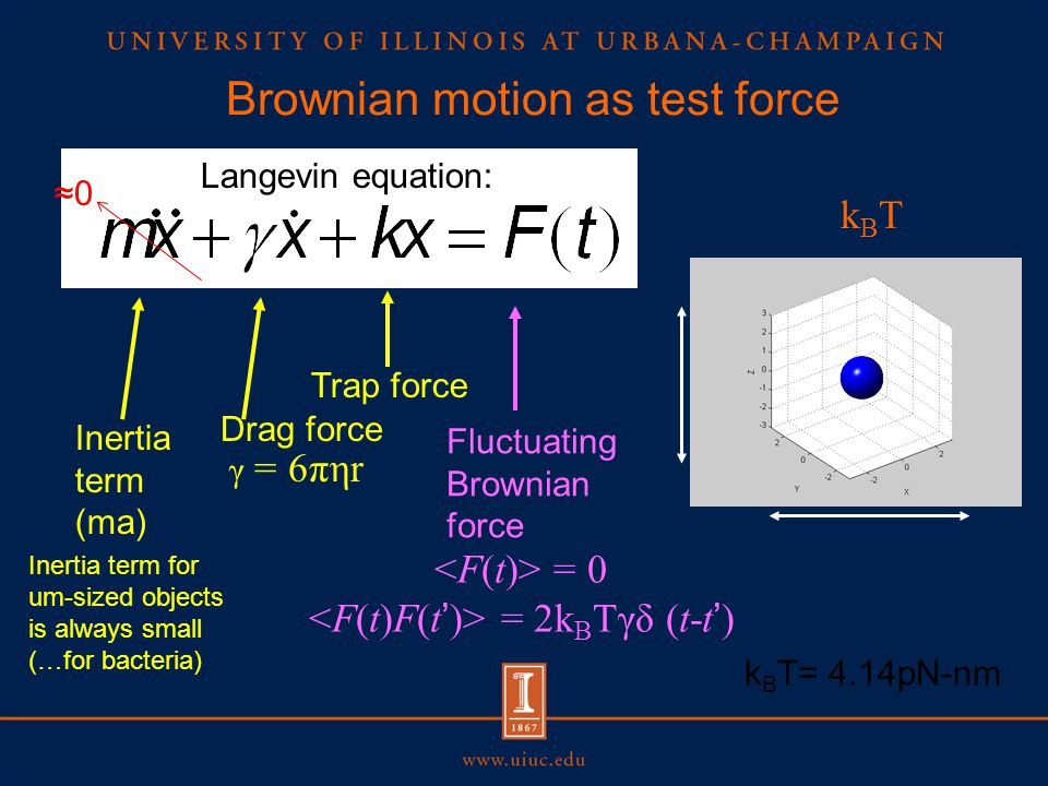 Brownian motion as test force Drag force γ = 6πηr Fluctuating Brownian force Trap force = 0 = 2k B Tγδ (t-t') kBTkBT k B T= 4.14pN-nm Langevin equation: Inertia term (ma) ≈0 Inertia term for um-sized objects is always small (…for bacteria)