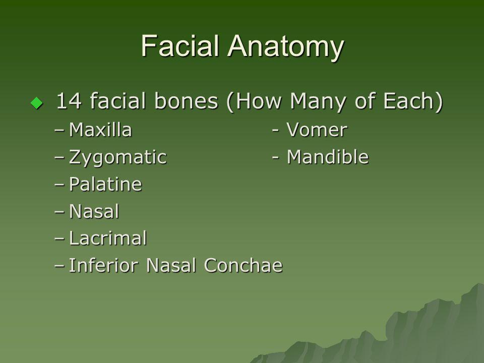 Facial Anatomy  14 facial bones (How Many of Each) –Maxilla - Vomer –Zygomatic - Mandible –Palatine –Nasal –Lacrimal –Inferior Nasal Conchae