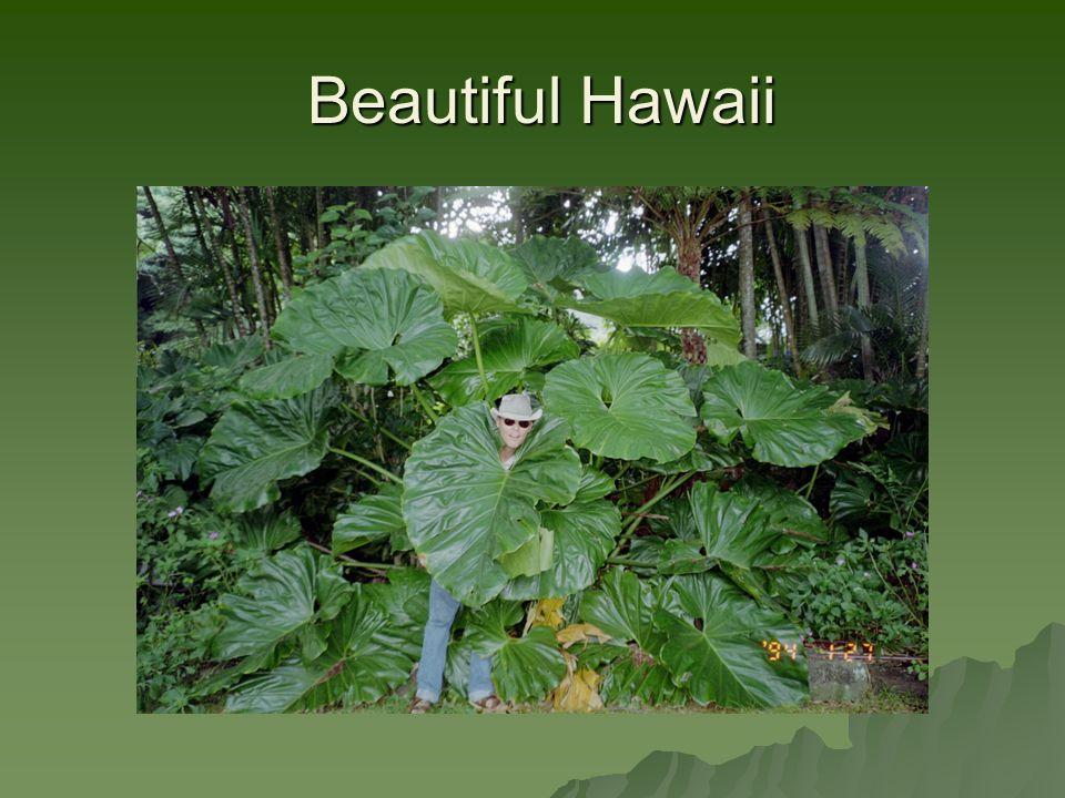 Beautiful Hawaii Beautiful Hawaii