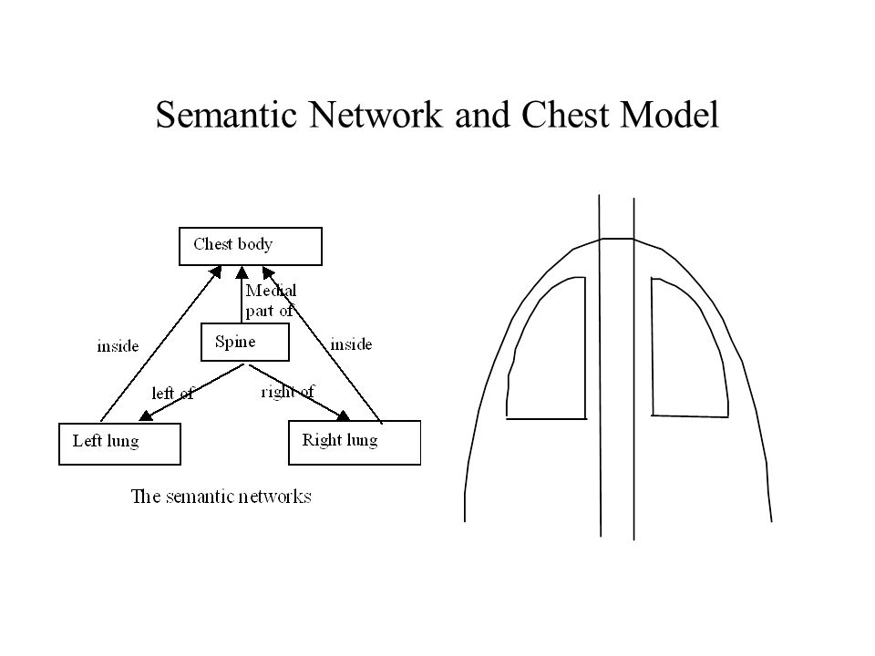 Semantic Network and Chest Model