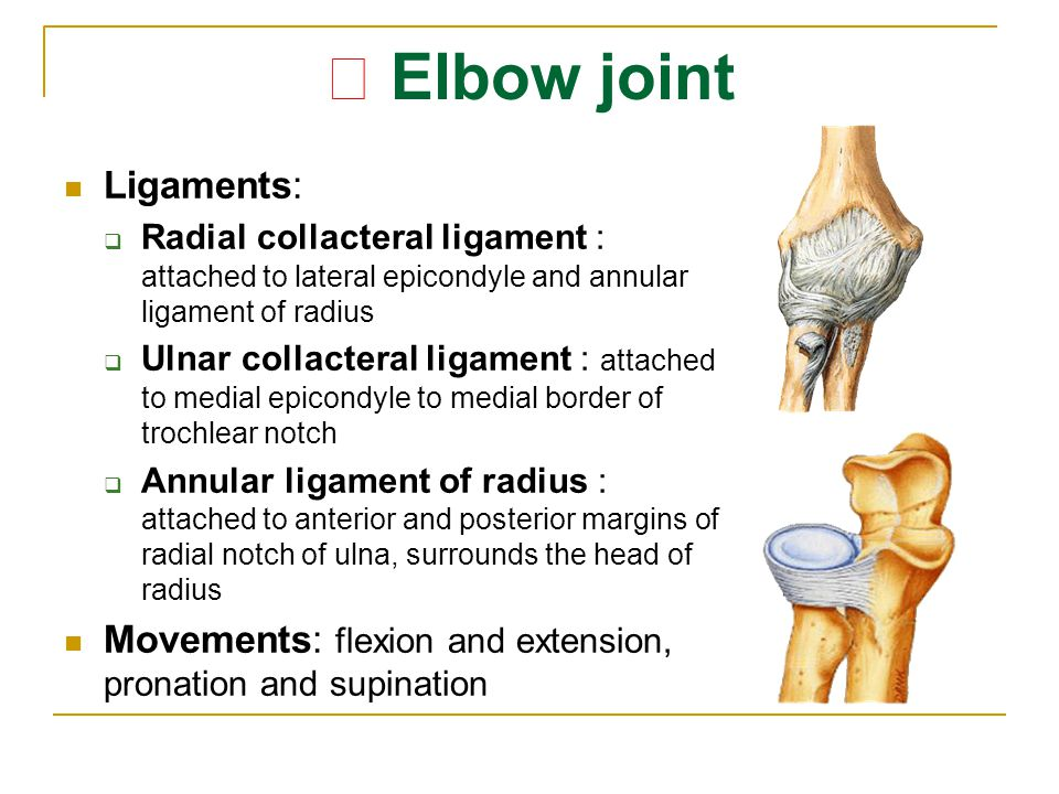 ★ Elbow joint Ligaments:  Radial collacteral ligament : attached to lateral epicondyle and annular ligament of radius  Ulnar collacteral ligament :