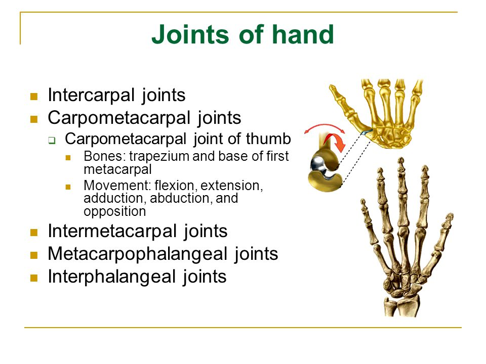 Joints of hand Intercarpal joints Carpometacarpal joints  Carpometacarpal joint of thumb Bones: trapezium and base of first metacarpal Movement: flex