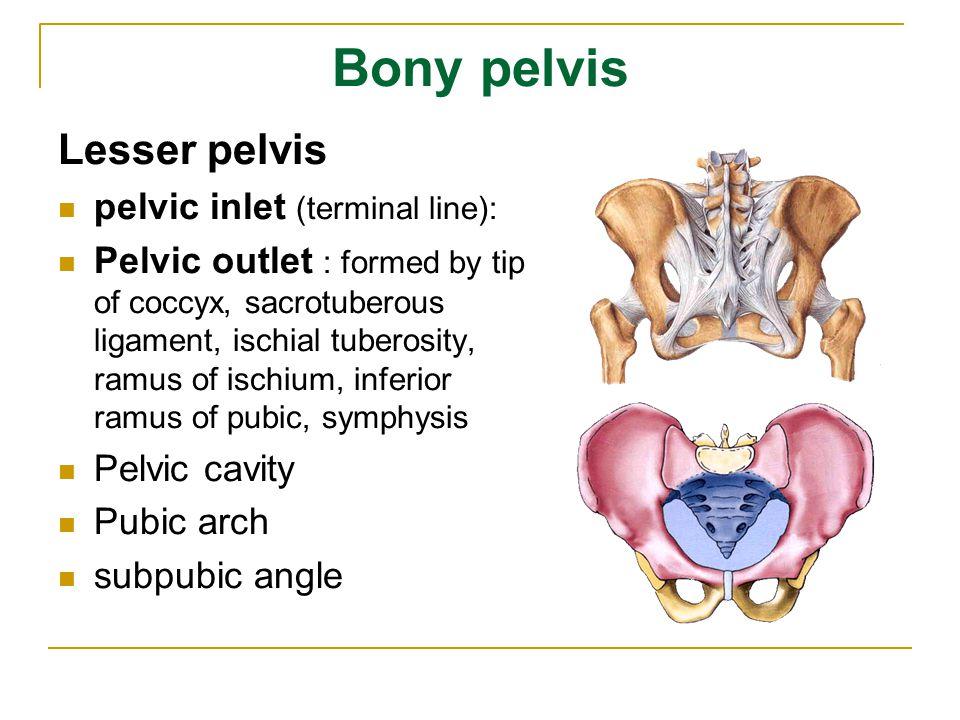 Bony pelvis Lesser pelvis pelvic inlet (terminal line): Pelvic outlet : formed by tip of coccyx, sacrotuberous ligament, ischial tuberosity, ramus of ischium, inferior ramus of pubic, symphysis Pelvic cavity Pubic arch subpubic angle