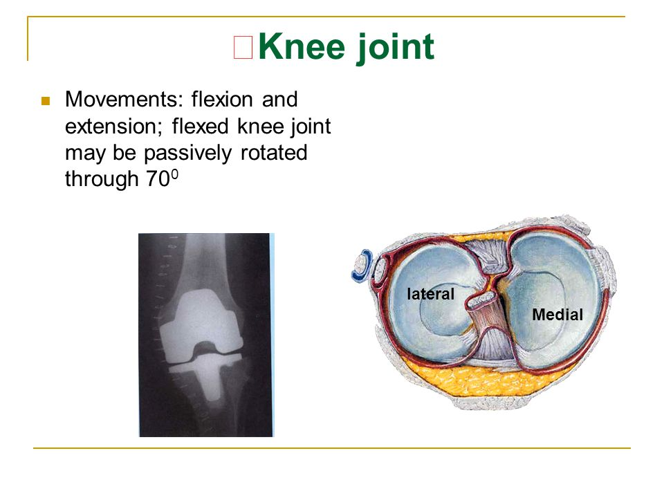 ★ Knee joint Movements: flexion and extension; flexed knee joint may be passively rotated through 70 0 lateral Medial