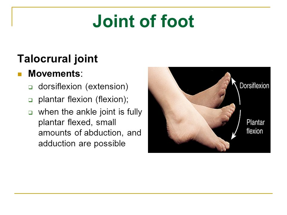 Joint of foot Talocrural joint Movements:  dorsiflexion (extension)  plantar flexion (flexion);  when the ankle joint is fully plantar flexed, smal