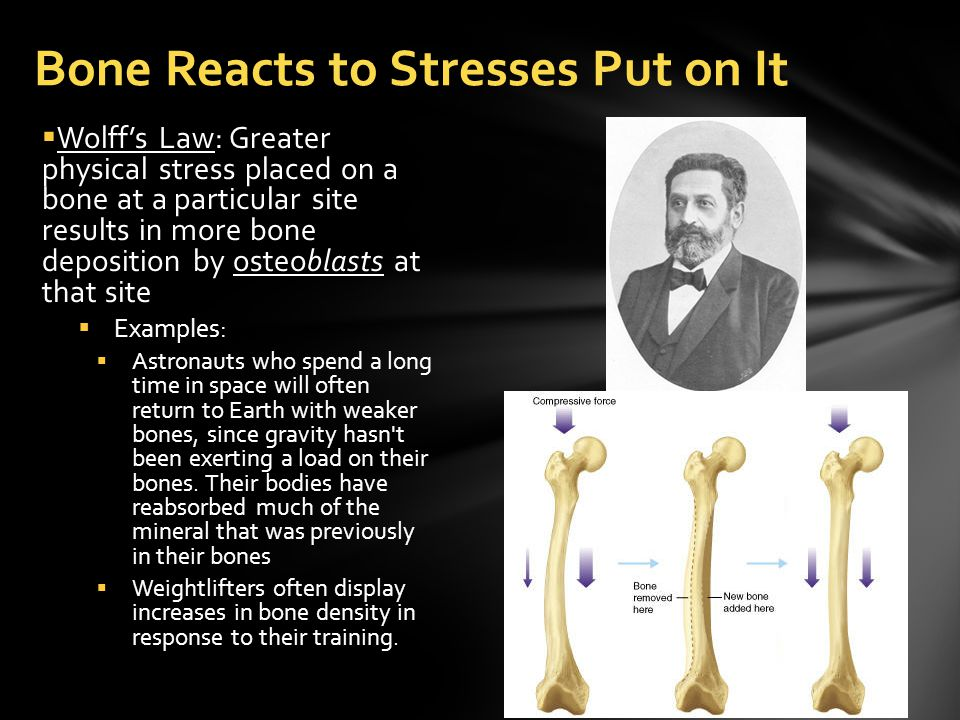  Wolff's Law: Greater physical stress placed on a bone at a particular site results in more bone deposition by osteoblasts at that site  Examples:  Astronauts who spend a long time in space will often return to Earth with weaker bones, since gravity hasn t been exerting a load on their bones.