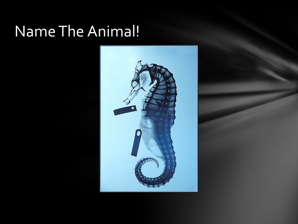 Name The Animal!