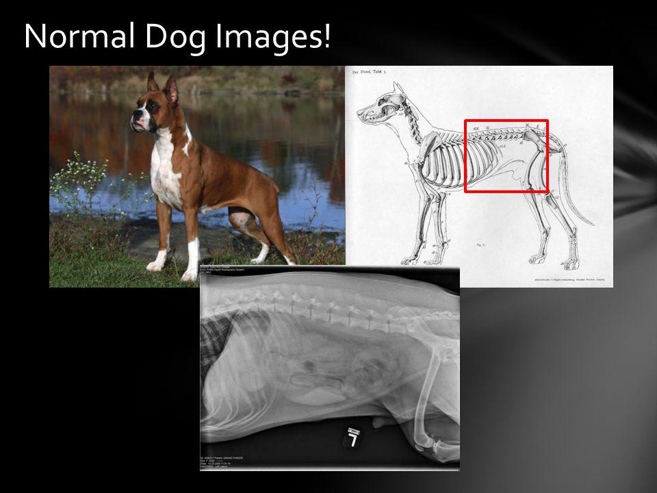 Normal Dog Images!