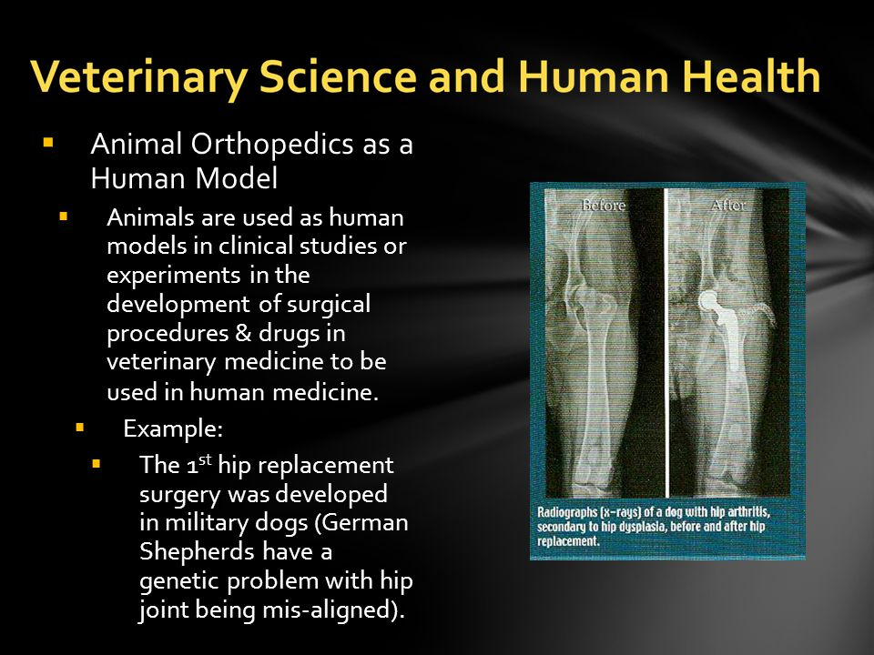  Animal Orthopedics as a Human Model  Animals are used as human models in clinical studies or experiments in the development of surgical procedures & drugs in veterinary medicine to be used in human medicine.