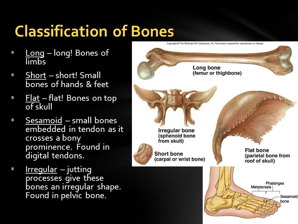  Long – long. Bones of limbs  Short – short. Small bones of hands & feet  Flat – flat.