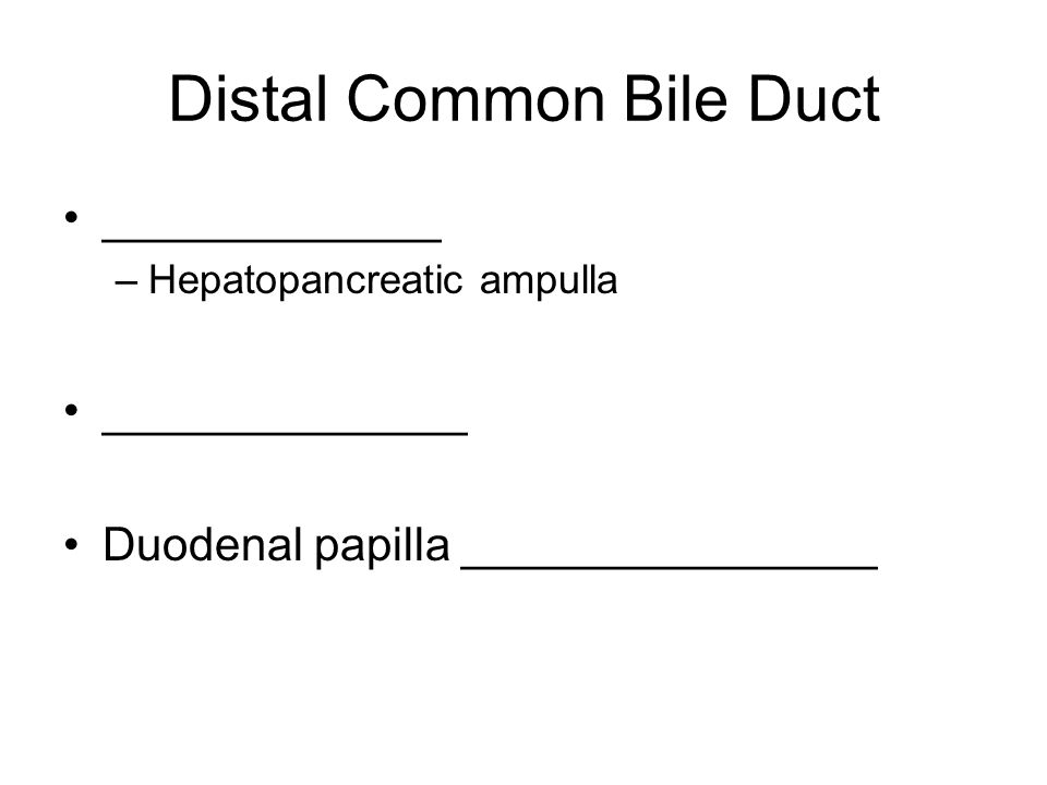 Distal Common Bile Duct _____________ –Hepatopancreatic ampulla ______________ Duodenal papilla ________________