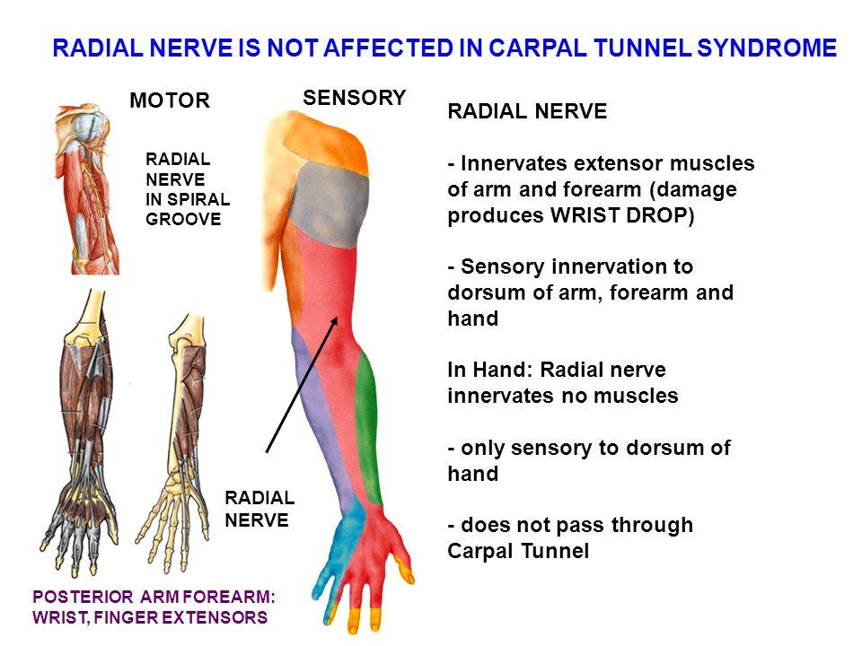 Wrist Nerve Anatomy Choice Image - human body anatomy
