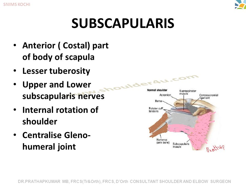 DR.PRATHAPKUMAR MB, FRCS(Tr&Orth), FRCS, D'Orth CONSULTANT SHOULDER AND ELBOW SURGEON SNIMS KOCHI SUBSCAPULARIS Anterior ( Costal) part of body of scapula Lesser tuberosity Upper and Lower subscapularis nerves Internal rotation of shoulder Centralise Gleno- humeral joint
