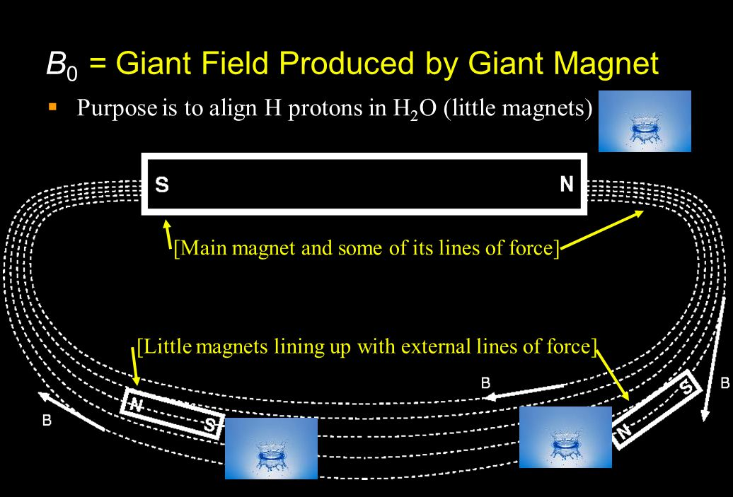 B 0 = Giant Field Produced by Giant Magnet  Purpose is to align H protons in H 2 O (little magnets) [Little magnets lining up with external lines of