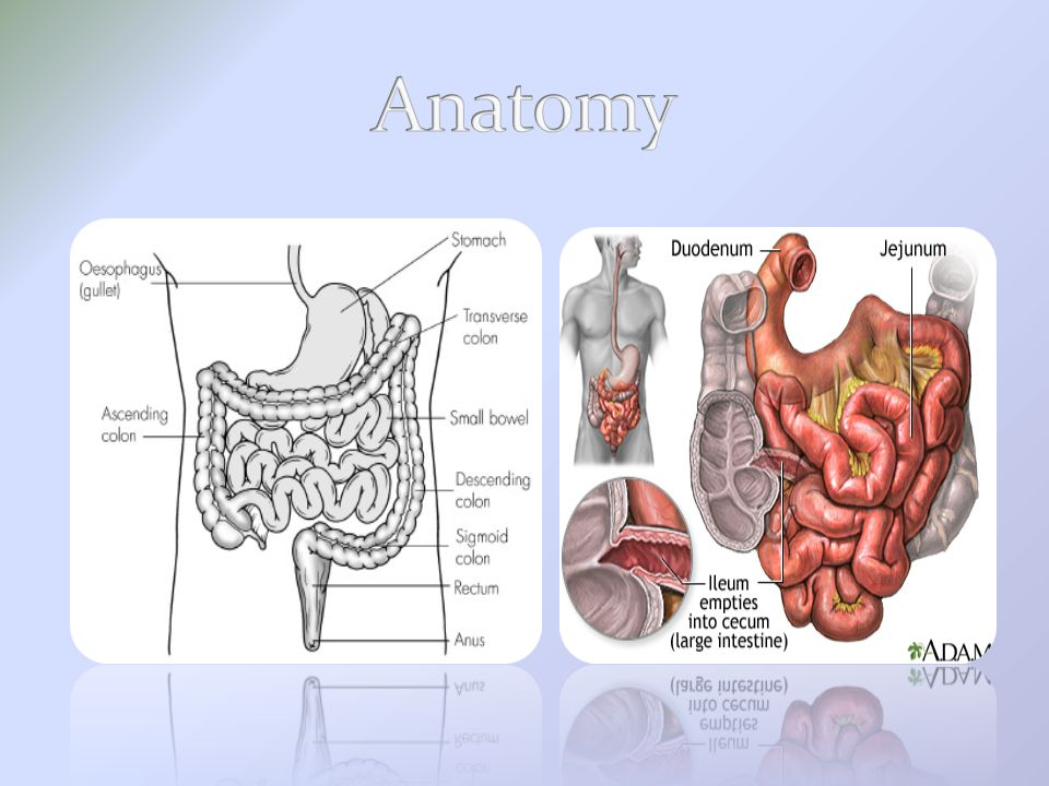 Parts of S.I: Duodenum: 1 st,shortest,widest and most fixed.