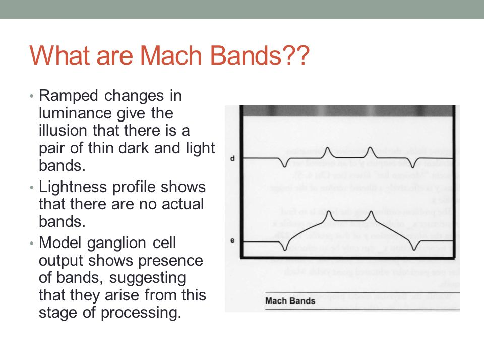 What are Mach Bands?.