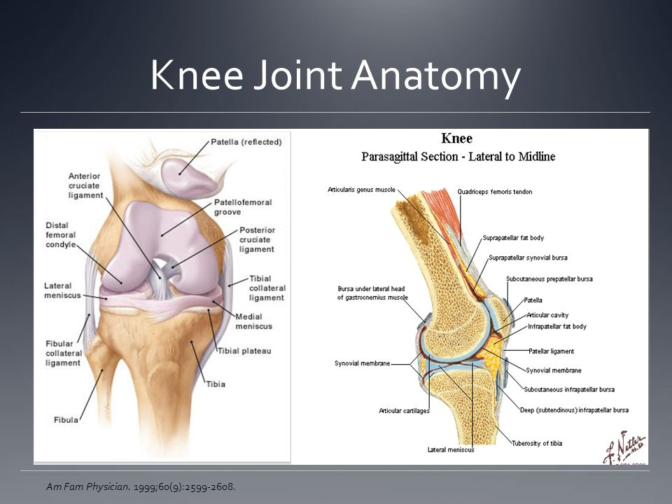 Knee Joint Anatomy Am Fam Physician. 1999;60(9):2599-2608.