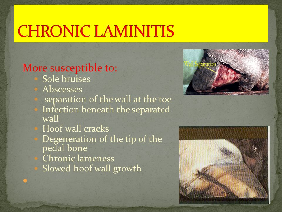 More susceptible to: Sole bruises Abscesses separation of the wall at the toe Infection beneath the separated wall Hoof wall cracks Degeneration of the tip of the pedal bone Chronic lameness Slowed hoof wall growth