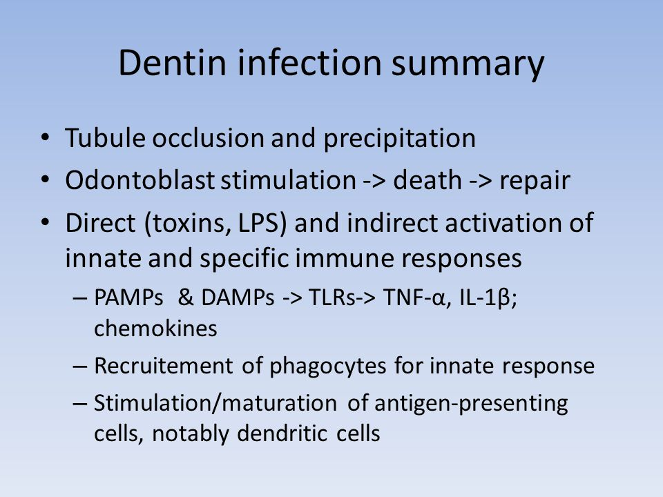 Dentin infection summary Tubule occlusion and precipitation Odontoblast stimulation -> death -> repair Direct (toxins, LPS) and indirect activation of