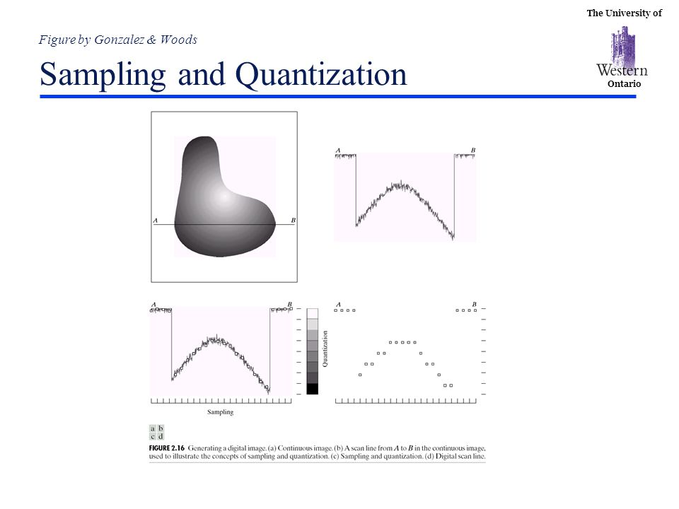 The University of Ontario Figure by Gonzalez & Woods Sampling and Quantization