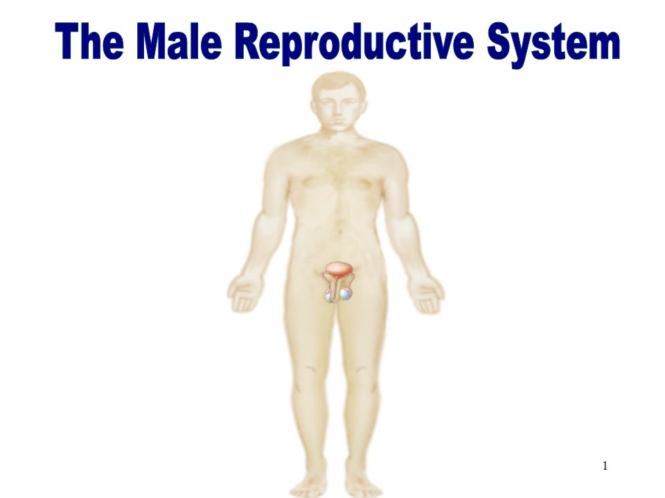 11 Male Examination Digital rectal exam (DRE) checks for rectal and prostate abnormalities Prostate-specific antigen (PSA) is a blood test to screen for prostate cancer Semen analysis determines quality and quantity of sperm