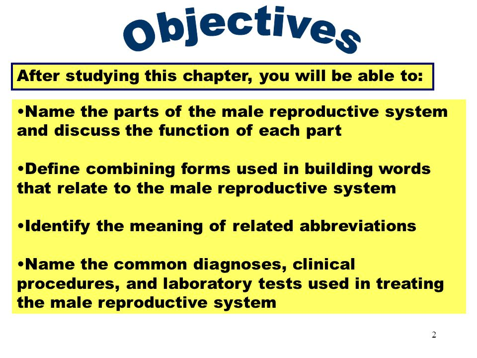 1 The Male Reproductive System