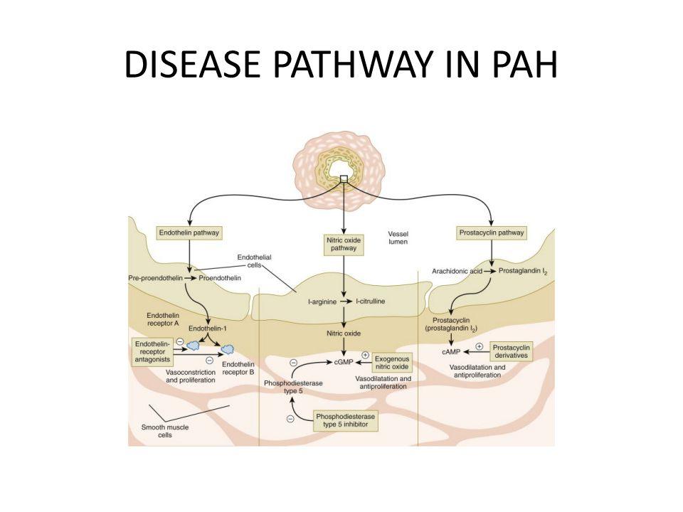DISEASE PATHWAY IN PAH