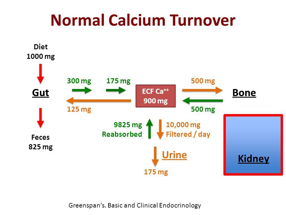 Normal Calcium Turnover Diet 1000 mg Gut Feces 825 mg ECF Ca ++ 900 mg 300 mg 125 mg 175 mg Bone 500 mg Urine 175 mg 9825 mg Reabsorbed 10,000 mg Filt