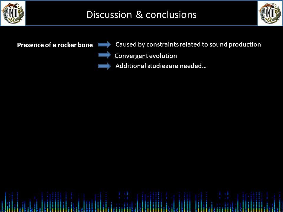 Discussion & conclusions Juvenile and female O. rochei Male O.