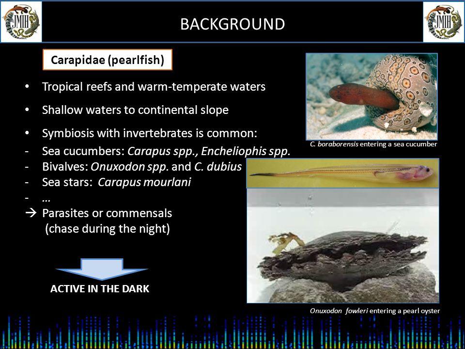 BACKGROUND Benthopelagic, shallow to hadal depths -Abyssobrotula galatheae: 3110-8370 m (WR for a fish) -Genypterus blacodes: 200-650 m, max.