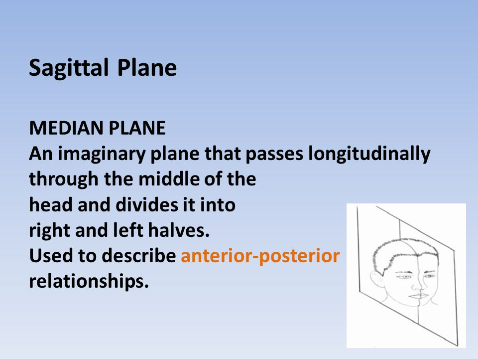 Frontal Plane VERTICLE PLANE An imaginary plane that passes longitudinally through the head perpendicular to the sagittal plane dividing the head into front and back.