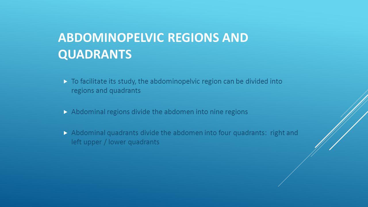 ABDOMINOPELVIC REGIONS AND QUADRANTS  To facilitate its study, the abdominopelvic region can be divided into regions and quadrants  Abdominal region