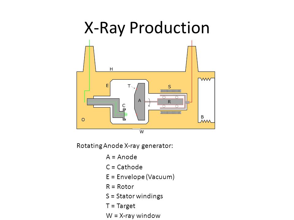 X-Ray Production Rotating Anode X-ray generator: A = Anode C = Cathode E = Envelope (Vacuum) R = Rotor S = Stator windings T = Target W = X-ray window