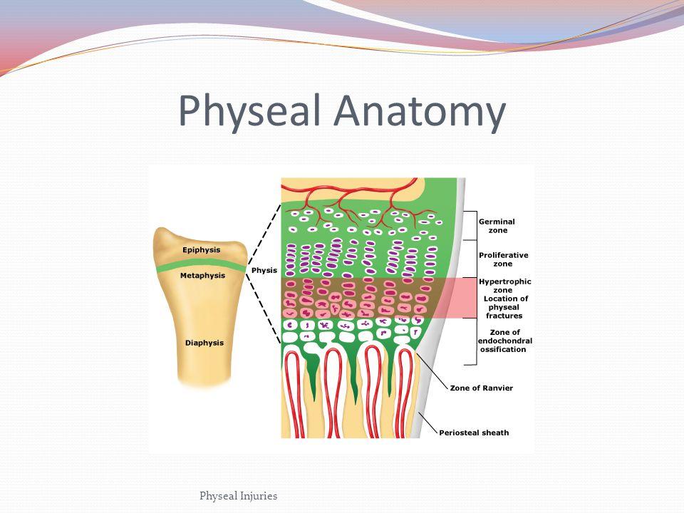 Physeal Anatomy Physeal Injuries