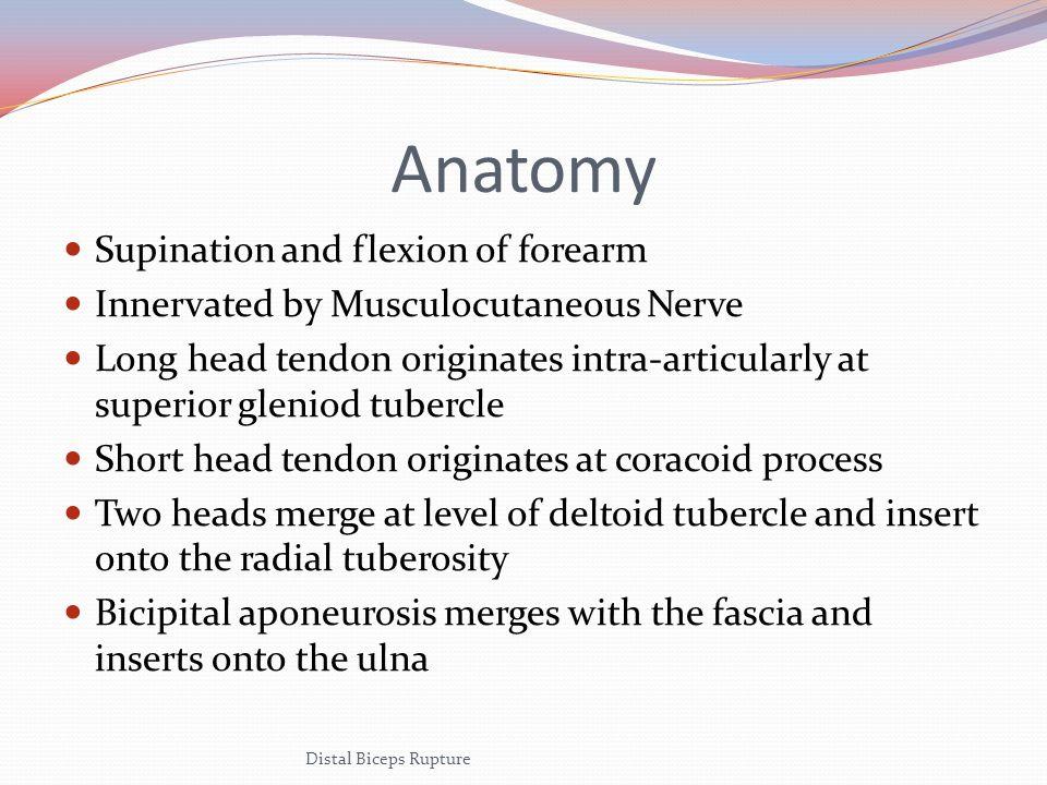 Anatomy Distal Biceps Rupture