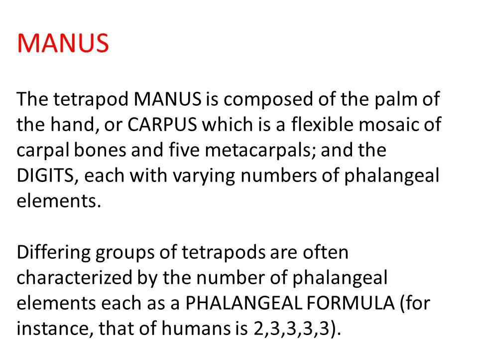 MANUS The tetrapod MANUS is composed of the palm of the hand, or CARPUS which is a flexible mosaic of carpal bones and five metacarpals; and the DIGITS, each with varying numbers of phalangeal elements.