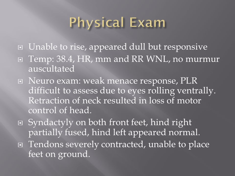  Unable to rise, appeared dull but responsive  Temp: 38.4, HR, mm and RR WNL, no murmur auscultated  Neuro exam: weak menace response, PLR difficult to assess due to eyes rolling ventrally.