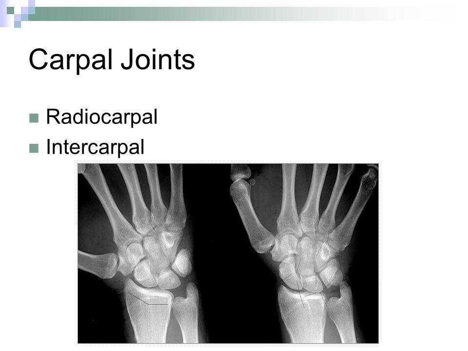 Carpal Joints Radiocarpal Intercarpal