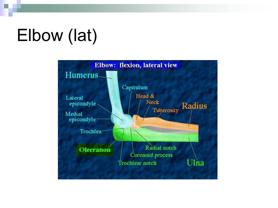 Elbow (lat)