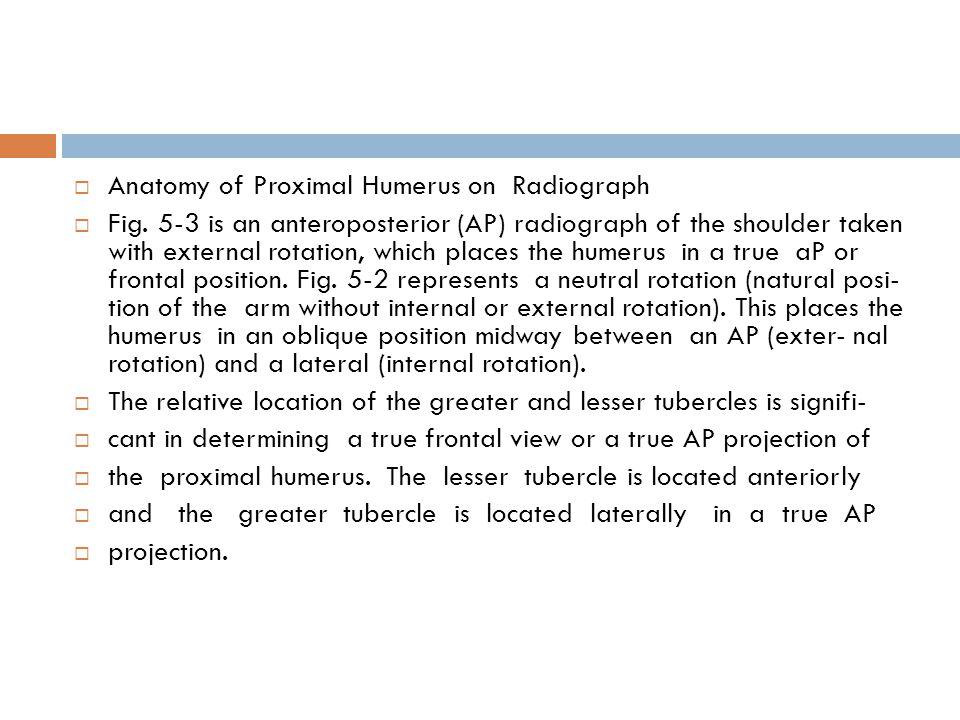  Anatomy of Proximal Humerus on Radiograph  Fig.