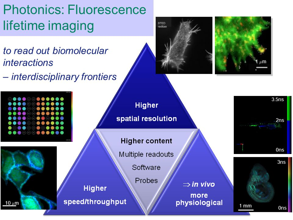 10  m Photonics: Fluorescence lifetime imaging 1  m 3ns 0ns 3.5ns 0ns 2ns 1 mm to read out biomolecular interactions – interdisciplinary frontiers