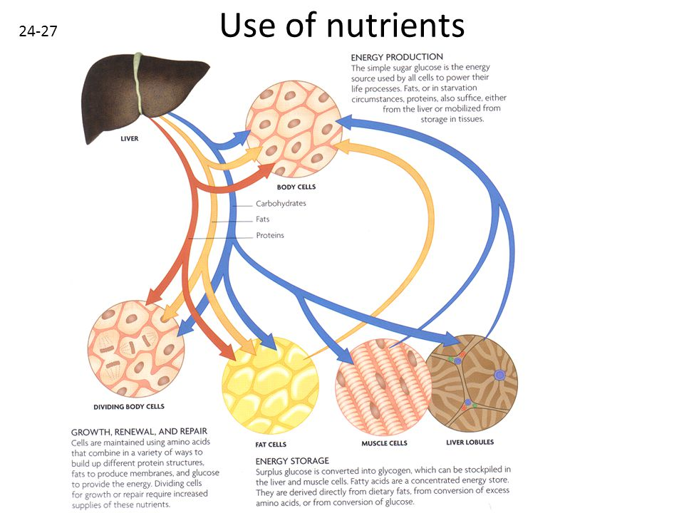 Use of nutrients 24-27