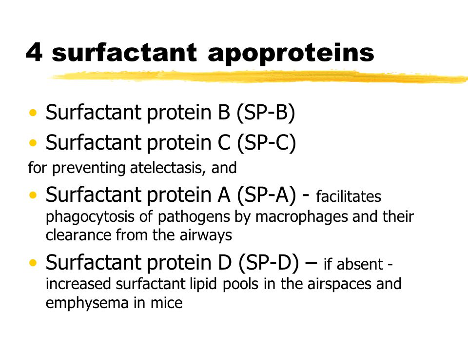 4 surfactant apoproteins Surfactant protein B (SP-B) Surfactant protein C (SP-C) for preventing atelectasis, and Surfactant protein A (SP-A) - facilit