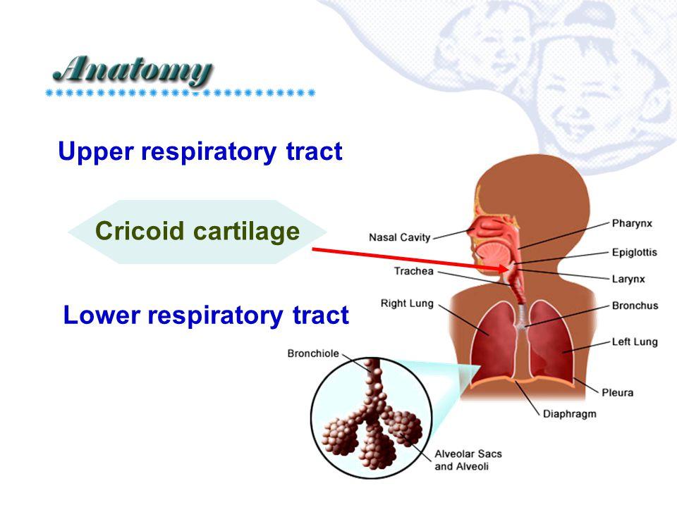 Common diseases  Upper respiratory tract: ♥ Influenza ♥ Tonsillitis ♥ laryngitis  Lower respiratory tract: ♥ bronchitis ♥ Asthma ♥ Pneumonia