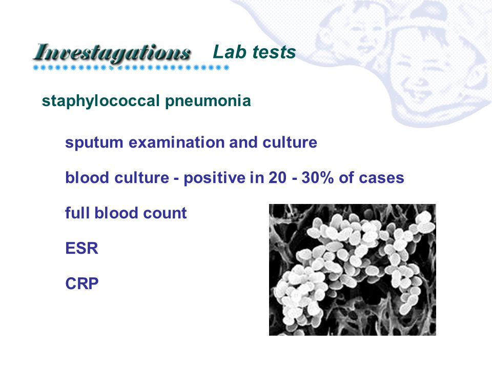 Lab tests staphylococcal pneumonia sputum examination and culture blood culture - positive in 20 - 30% of cases full blood count ESR CRP